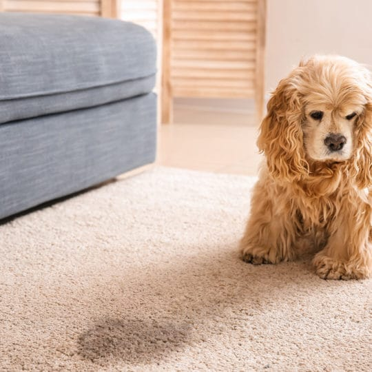 Stinky Carpet Solutions